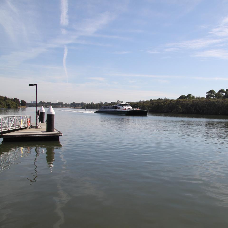 Parramatta River Cat