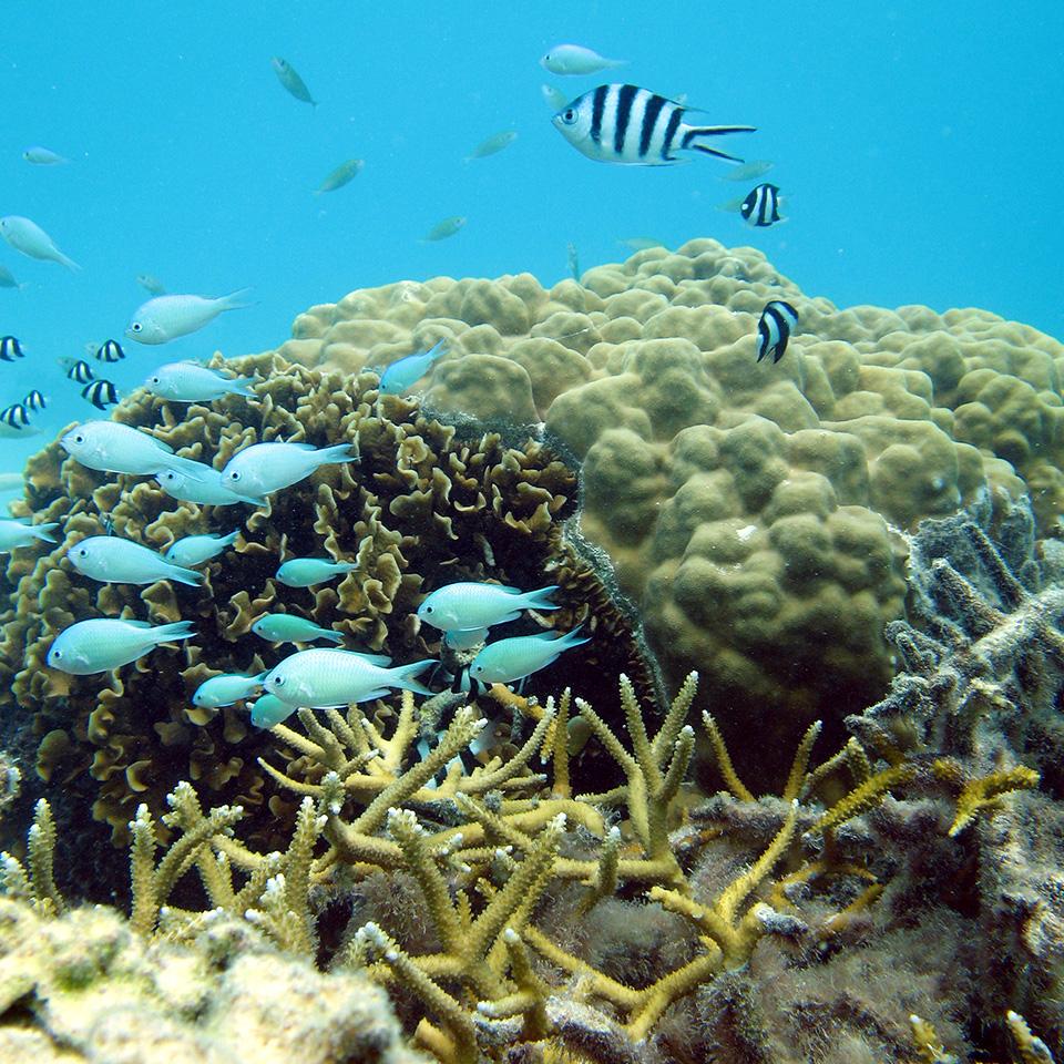 Coral and fish Tahiti