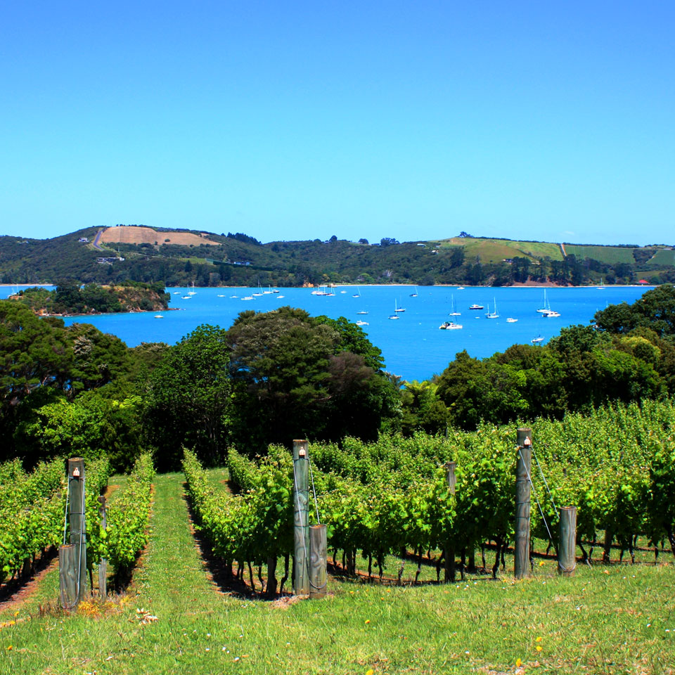 how to get to auckland island