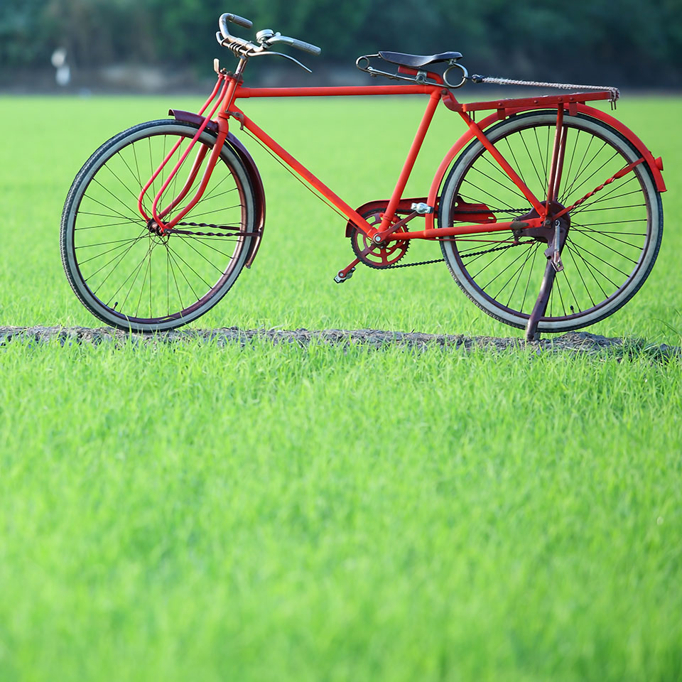 Paddyfieldbike_