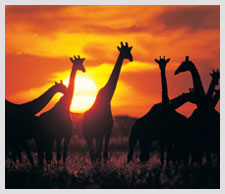 South Africa Adventure Holidays | Expedia.com.au