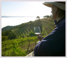 Napa Valley Wine Holidays | Expedia.com.au