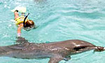 What you can do: Deep-sea fishing, swim with dolphins