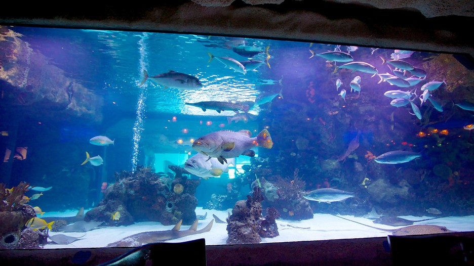 Aquarium Houston Such An Amazing Place To Eat Learn