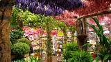 Flower Market - Amsterdam - Tourism Media