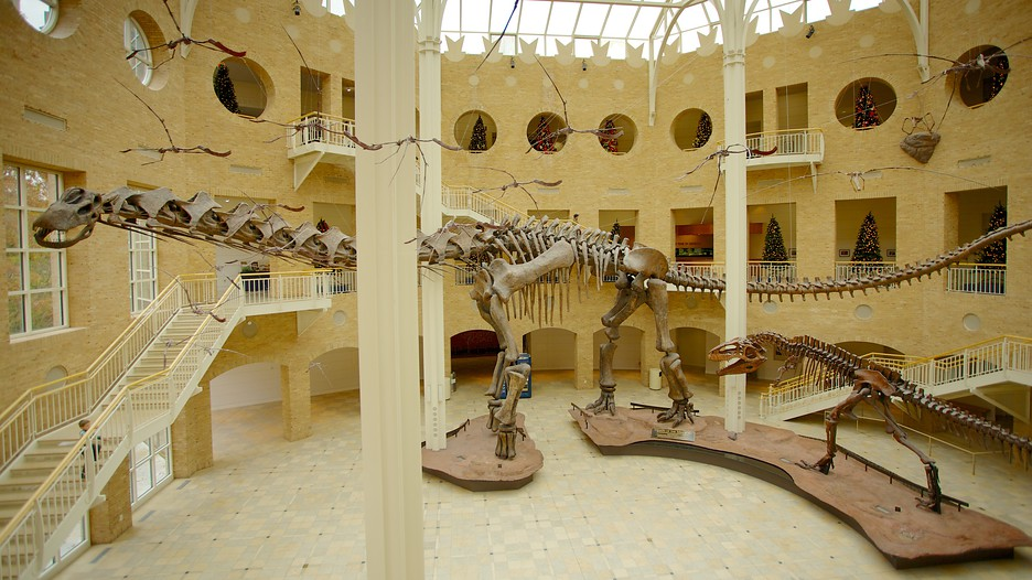 The Fernbank Museum Of Natural History