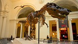 Field Museum - Chicago - Tourism Media