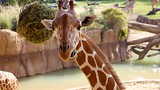 Dallas Zoo - Dallas - Tourism Media