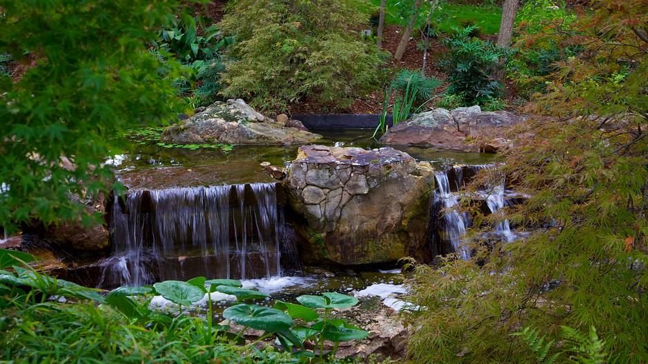 dallas arboretum and botanical garden in dallas texas With dallas arboretum and botanical garden dallas tx