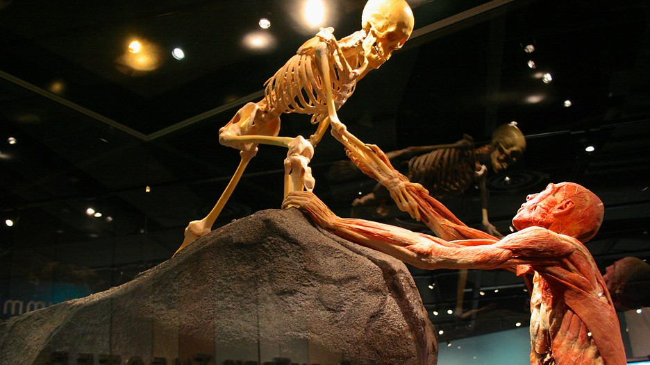 Denver Museum of Nature and Science (Museo ...