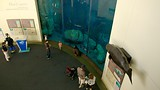 Aquarium of the Pacific - Long Beach - Tourism Media