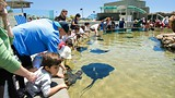Aquarium of the Pacific - Long Beach - Los Angeles Tourism & Convention Board/Travis Conklin