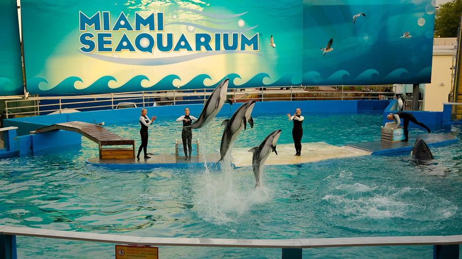 Miami Seaquarium in Miami, Florida Expedia