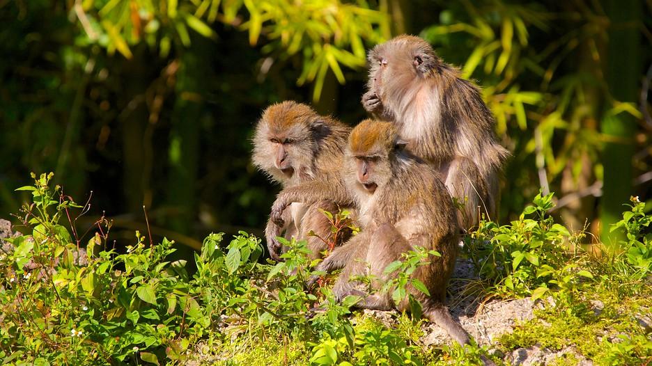 jungle monkey miami