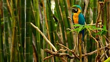 Audubon Zoo - New Orleans - Tourism Media