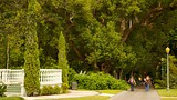 Harry P. Leu Gardens - Orlando - Tourism Media