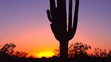 Sonoran Dessert - Greater Phoenix Convention and Visitors Bureau