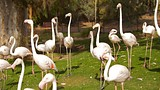 Phoenix Zoo - Phoenix - Greater Phoenix Convention and Visitors Bureau