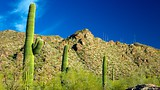 Phoenix - USA - Tourism Media