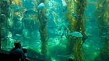 Birch Aquarium - Tourism Media