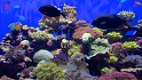 Birch Aquarium - La Jolla - Tourism Media
