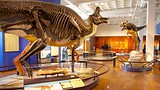 	San Diego Natural History Museum - Tourism Media
