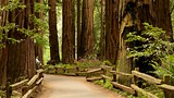 Muir Woods - San Rafael - Tourism Media