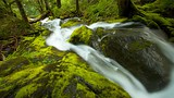 Mount Rainier National Park - Tourism Media