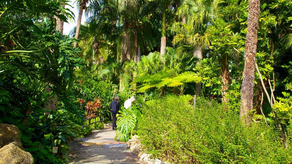 Sunken Gardens In St Petersburg Clearwater Florida Expedia