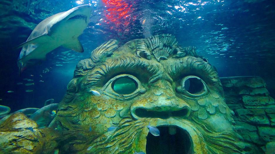 Sydney Aquarium - Sydney, New South Wales Attraction ...