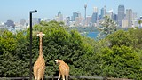 Taronga Zoo - Mosman - Tourism Media