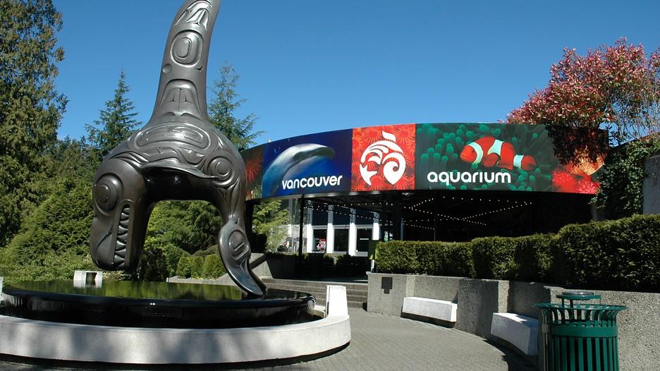 Vancouver Aquarium In Vancouver British Columbia Expedia