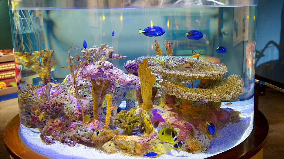 South Carolina Aquarium in Charleston, South Carolina ...