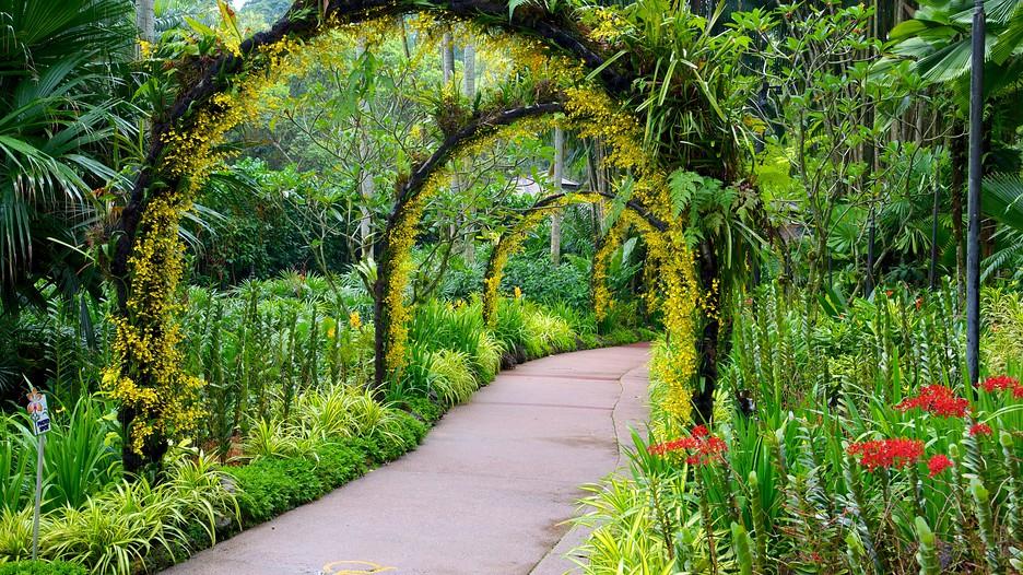 シンガポール植物園の画像 p1_32