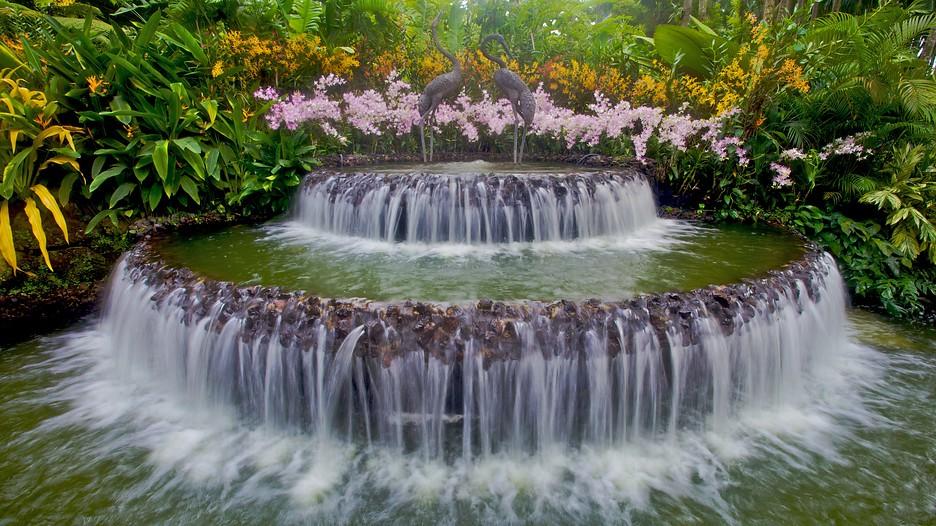 シンガポール植物園の画像 p1_26