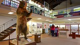Pacific Grove Museum of Natural History - Monterey - Tourism Media