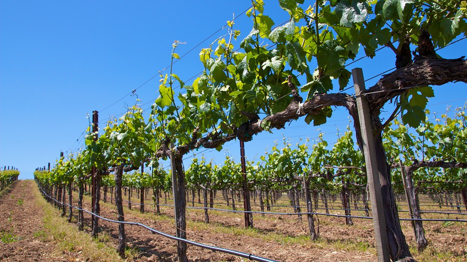Napa valley vacation packages book cheap vacations for Best time to visit napa valley wine country