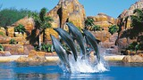 Sea World - Gold Coast - Tourism Queensland