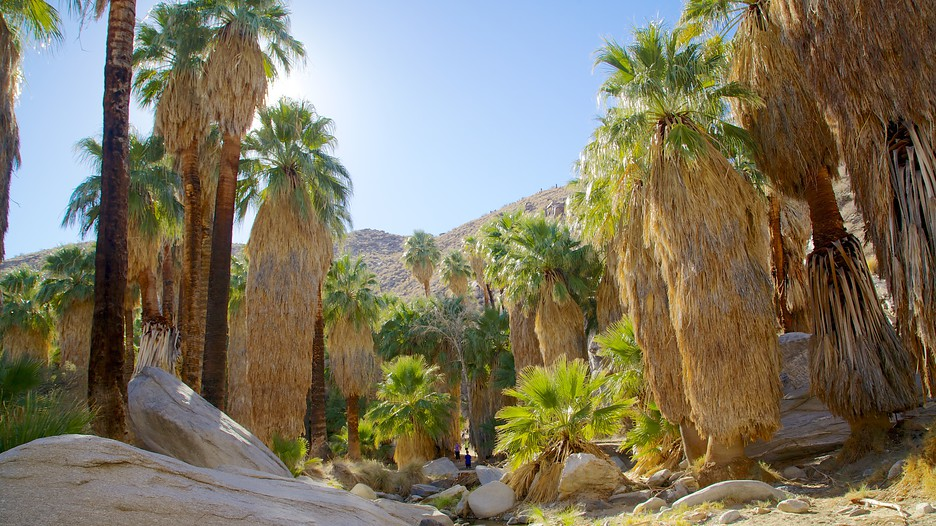 Indian Canyon - Palm Springs - Tourism Media