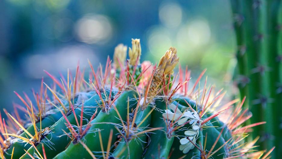 Jardim Botânico Moorten e Cactarium - Palm Springs - Tourism Media