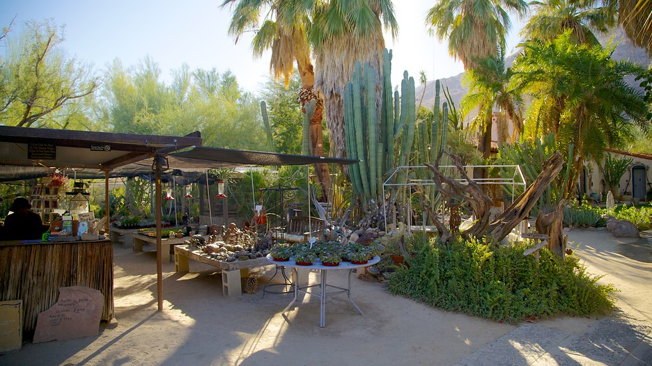 Moorten Botanical Garden And Cactarium In Palm Springs California Expedia
