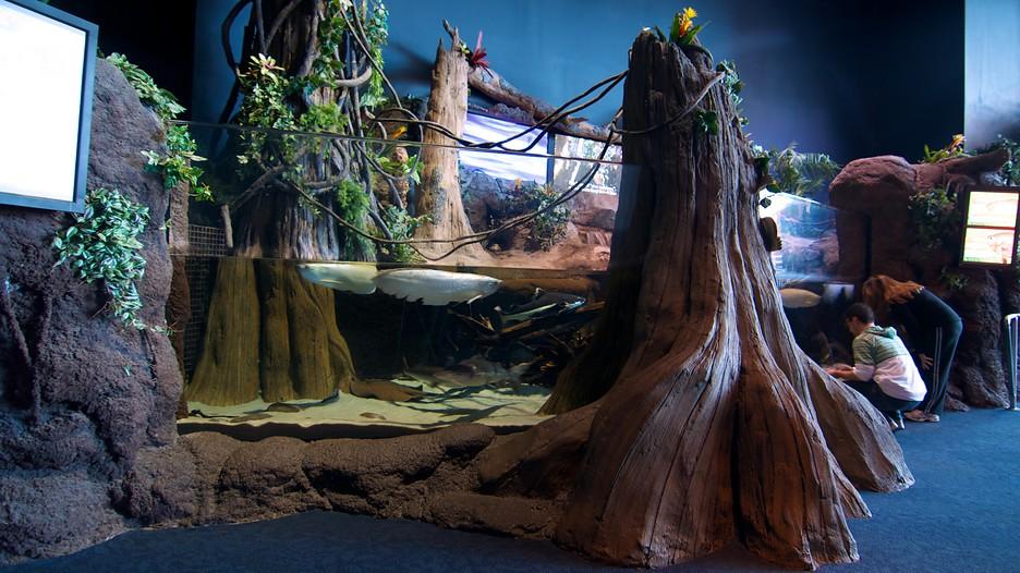 Ripley's Aquarium in Myrtle Beach, South Carolina   Expedia.ca
