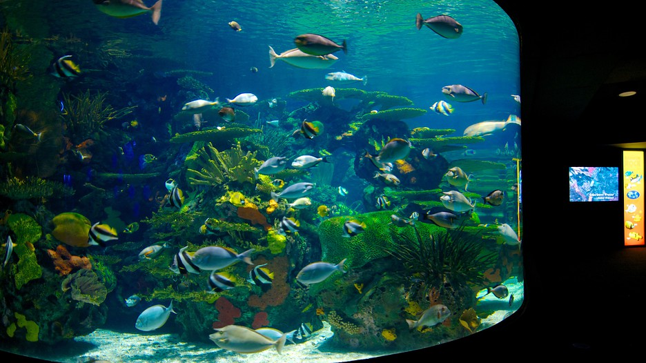 Ripley Aquarium Myrtle Beach Sc Coupons