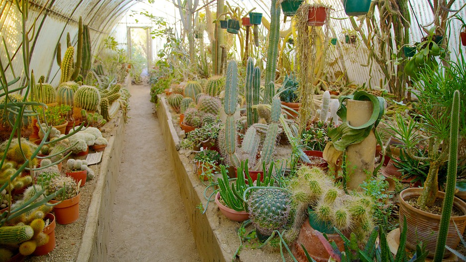 Image Result For Moorten Botanical Garden