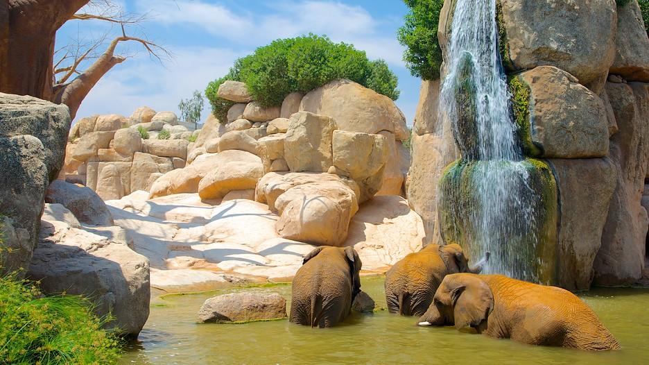 Bioparc Valencia Zoo in Valencia,  Expedia
