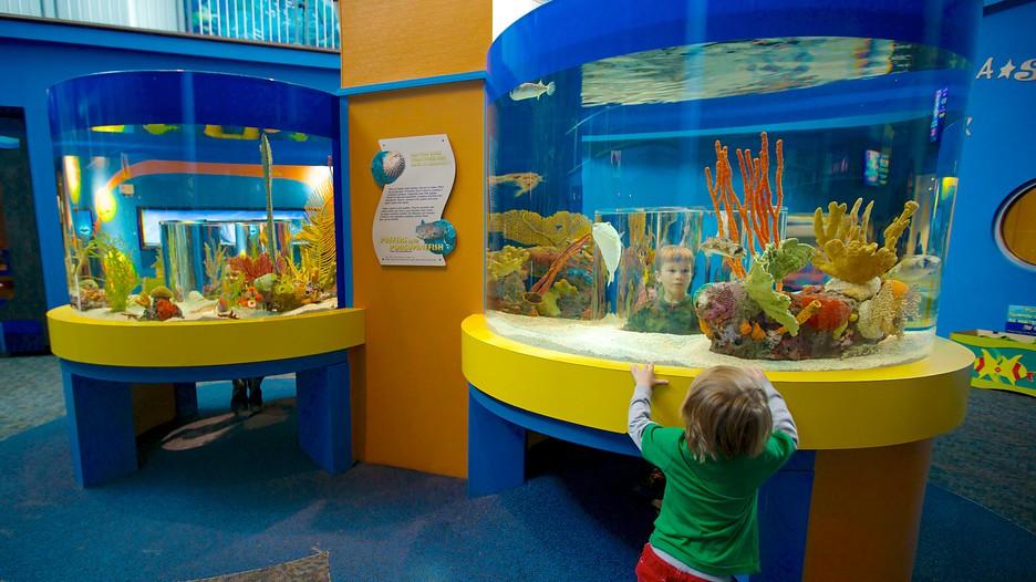 Ripley 39 S Aquarium Of The Smokies In Gatlinburg Pigeon
