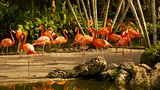 Flamingo Gardens - Fort Lauderdale - Tourism Media