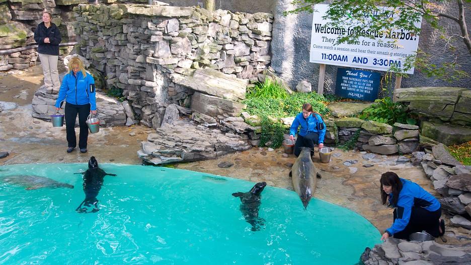 aquarium of niagara in niagara falls new york expedia