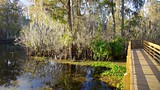 Lettuce Lake Park - Tampa Bay - Tourism Media