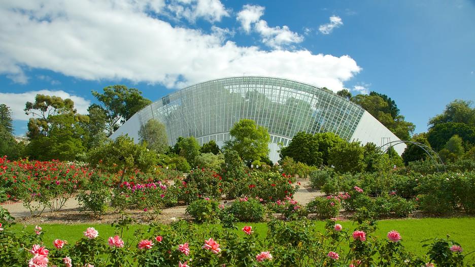 Adelaide botanic gardens adelaide tourism media for Garden trees adelaide